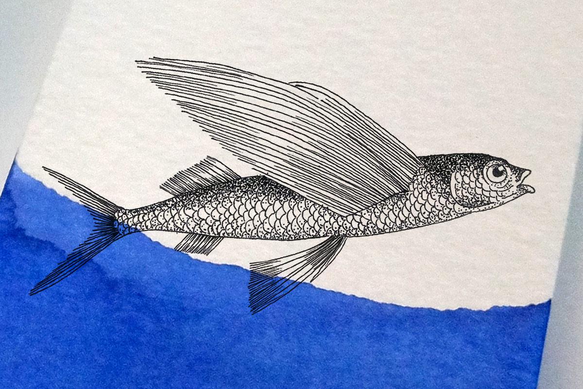 webandesign_identity_flying_fish_5